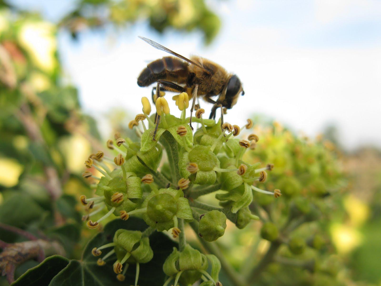 Bijen naar de tuin lokken