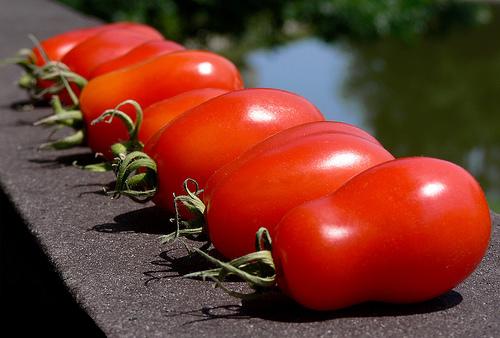 San Marzano tomatenzaden
