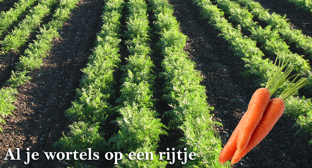 Zaailint wortelen